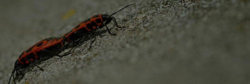 Η κρίση «θέριεψε» τις κατσαρίδες στην Ελλάδα