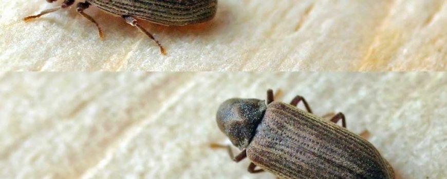 Τα έντομα οδεύουν προς εξαφάνιση και ο πλανήτης κινδυνεύει
