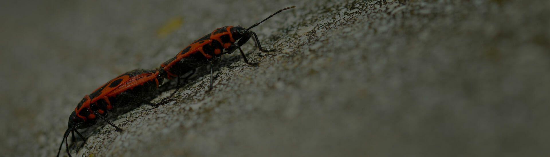 έντομα κατσαρίδες