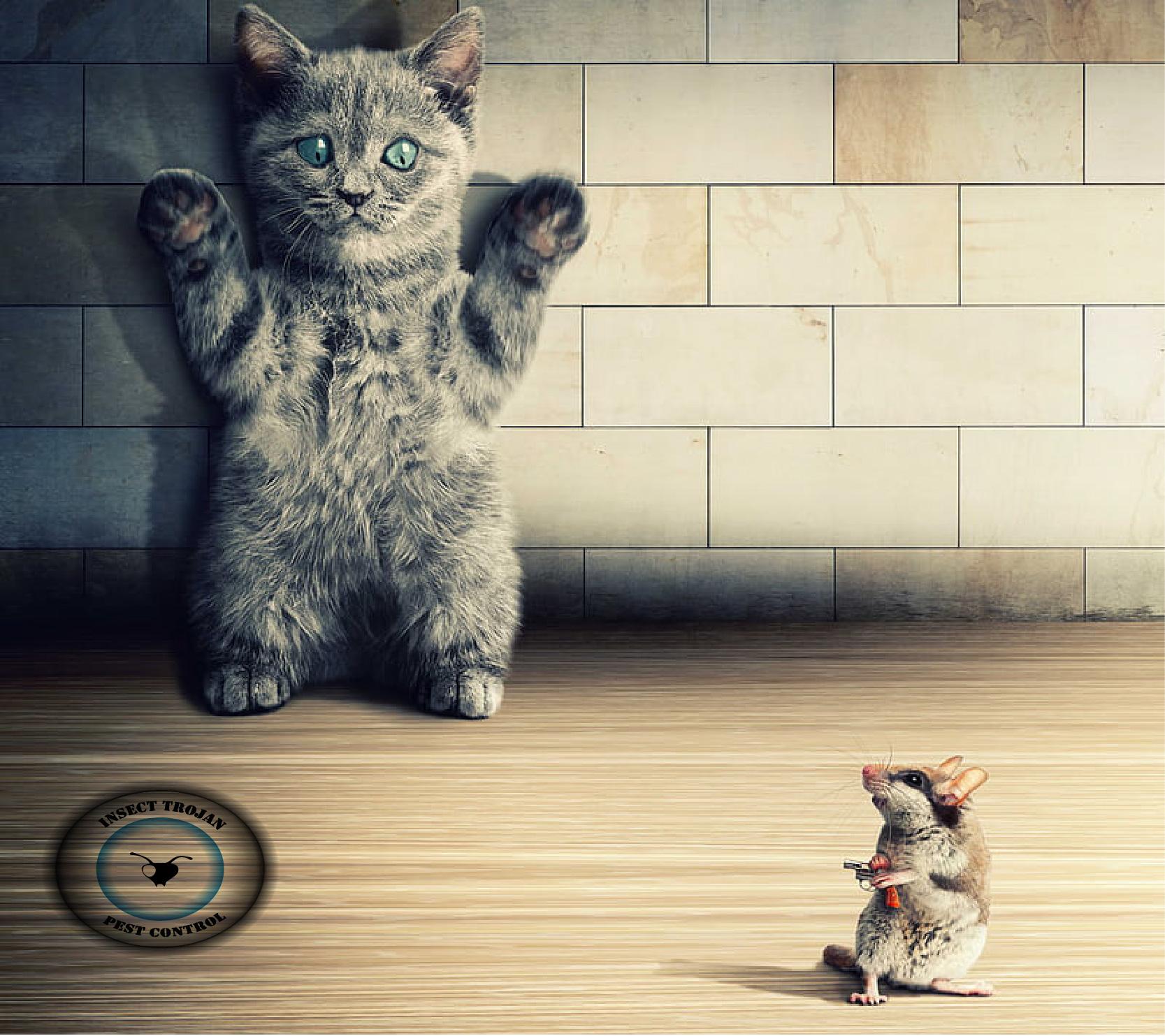 γάτα με ποντίκι